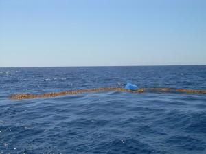 Kelp Paddy